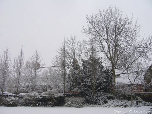 A White Easter - Photo 3